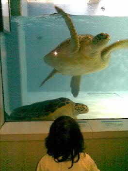 水族館なう