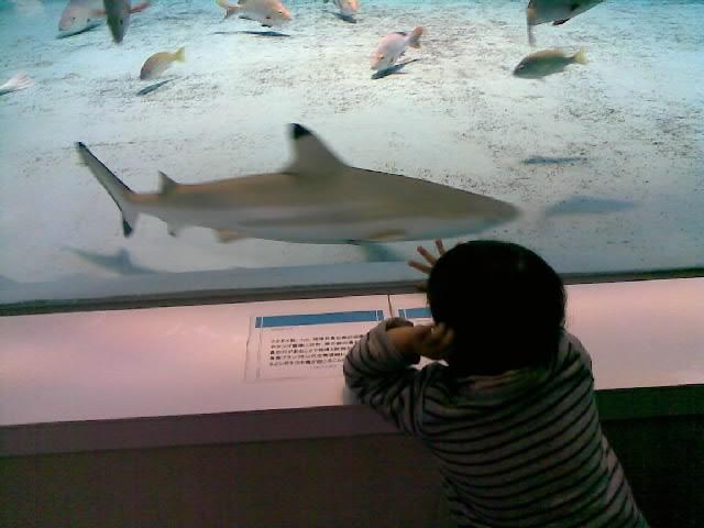 サメを見て