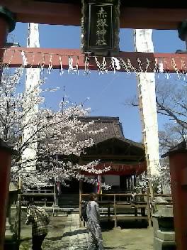 赤塚神社春祭り